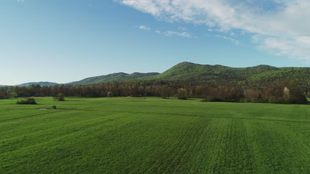 牧草地を丘の方に飛ぶ - 平地点の映像素材/bロール