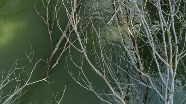 flying over a river with elm tree branches in it -  aerial footage