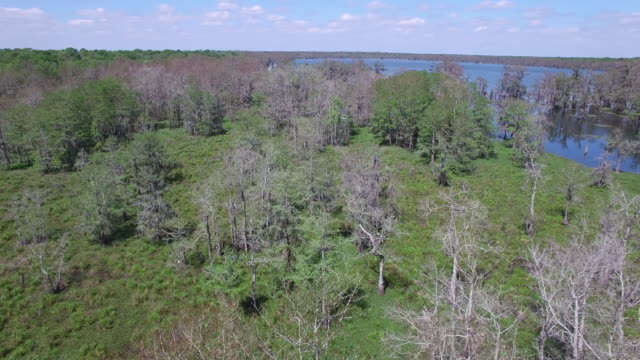 flying over bayou bird flying in distance - drone aerial 4k everglades, swamp bayou with wildlife alligator and nesting white ibis, anhinga, cormorant, snowy egret, egret, spoonbill, blue heron, eagle, hawk, america - drone aerial view - bayou lafourche stock-videos und b-roll-filmmaterial