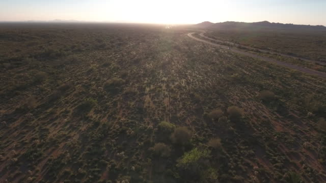 Flying over cactus field with road to the right - Drone Aerial 4K Arizona desert cactus, trail, adventure, discovery landscape, cholla, beautiful 4K Nature/Wildlife/Weather Drone Aerial View