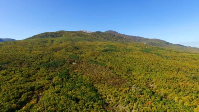 カラフルな秋、空中ビデオ森林上空 - クワッドコプター点の映像素材/bロール