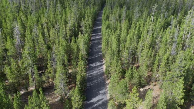 vídeos de stock e filmes b-roll de flying over dirt road cutting through pine tree forest - pine