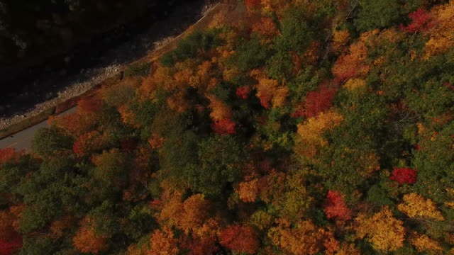 Flying Over Fall Colors and Winding Road