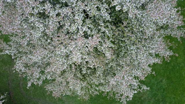 花木 (アングレード映像) 上空 - 生い茂る点の映像素材/bロール