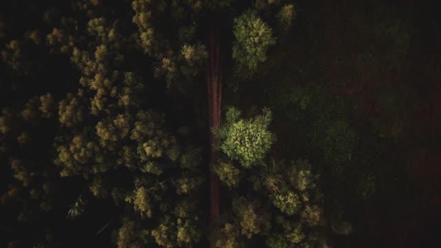 vídeos y material grabado en eventos de stock de volando sobre el pie en el bosque - embrujado