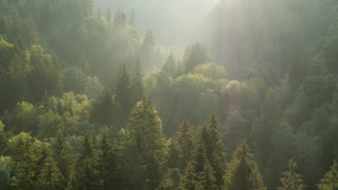 stockvideo's en b-roll-footage met vliegen over bos bij zonsopgang - nature