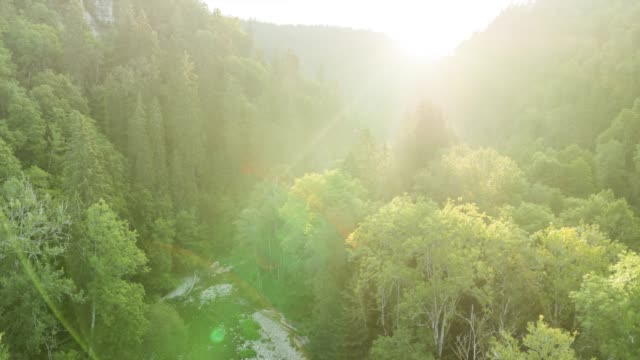 flying over forest at sunrise - lush stock videos & royalty-free footage