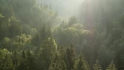 Flying over forest at sunrise