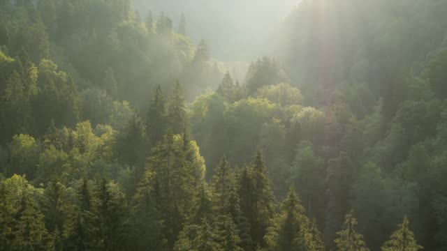 Flying over forest at sunrise