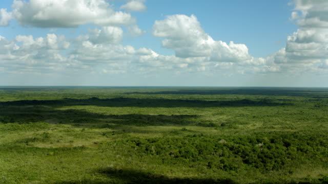 vídeos de stock, filmes e b-roll de flying over forest in yucatan mexico - yucatán