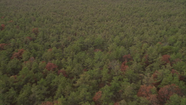 flying over forest near east hampton airport, wainscott, new york. shot in november 2011. - artbeats stock videos & royalty-free footage