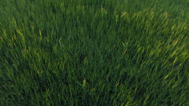 flying over green field - grass stock videos & royalty-free footage