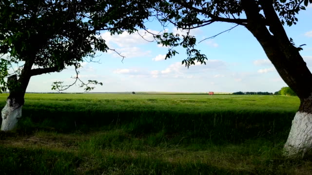flying over green wheat towards edge of field - monoculture stock videos & royalty-free footage