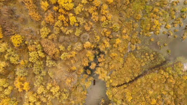 flying over lone moose in autumn in bog by drone - deer stock videos & royalty-free footage