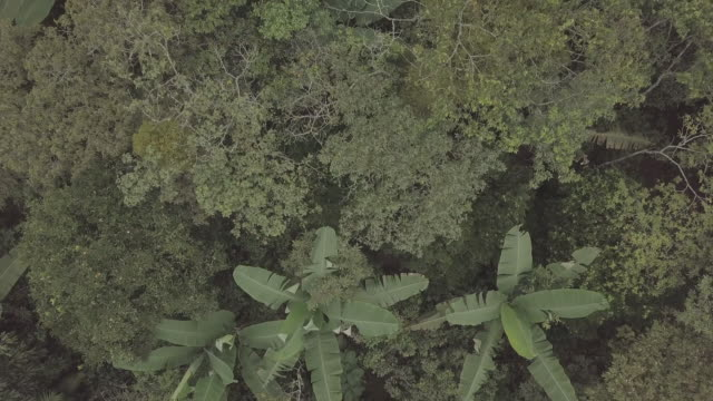 flying over mexican rainforest and fruit crops - plantation stock videos & royalty-free footage