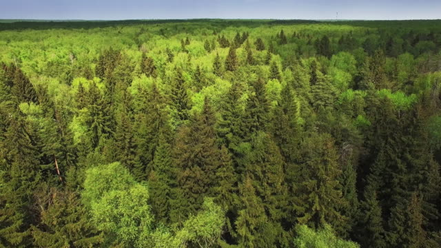 Flying over mixed forest