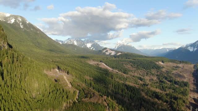 vídeos y material grabado en eventos de stock de volando sobre la ladera de la montaña en washington en la hora dorada por drone - pinar