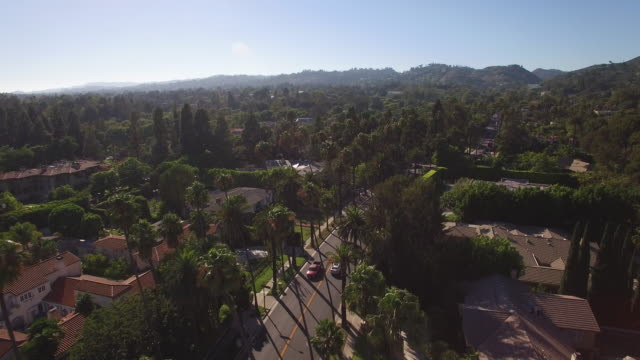 Flying over palm trees in Beverly Hills
