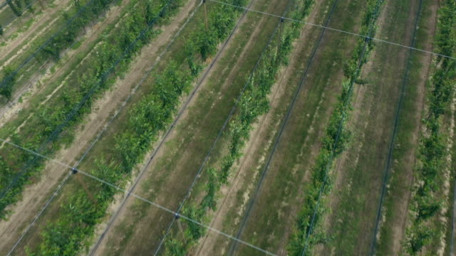 flying over peach orchard - netting stock videos & royalty-free footage