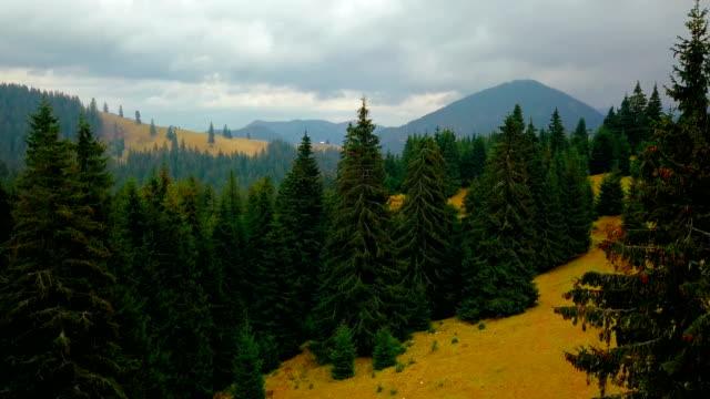 fliegen über dem kiefernwald auf gelben hügel wachsen. luftbild - hügelkette stock-videos und b-roll-filmmaterial