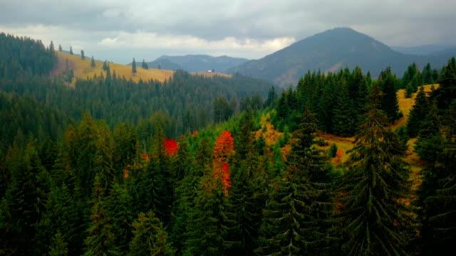 Fliegen über dem Kiefernwald auf gelben Hügel wachsen. Luftbild