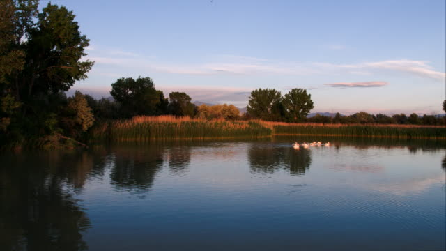 flying over pond as pelicans swim - american fork city stock videos & royalty-free footage