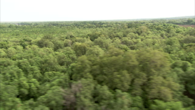 flying over rainforest and a wide brown river. available in hd. - wide stock videos and b-roll footage