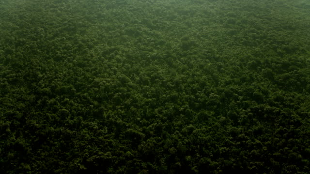 flying over rainforest canopy in mexico - copertura di alberi video stock e b–roll