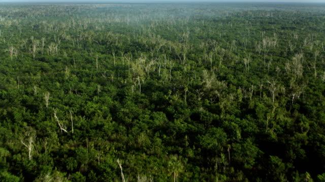 vidéos et rushes de flying over rainforest in quintano roo mexico - hémisphère nord