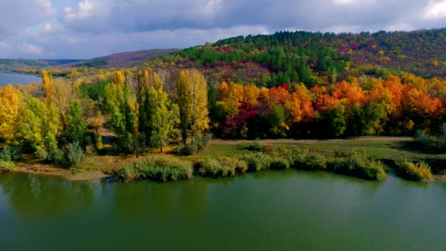 flying over river towards beautiful autumn forest. aerial landscape shooting - copse stock videos & royalty-free footage