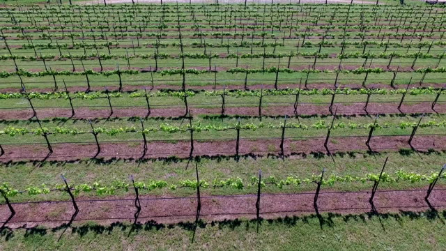 flying over rows and then Really high Aerial Wine to Market or Farm to Market in Austin Texas