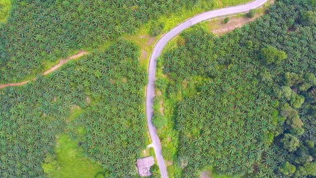 飛行上農村道路をパーム油ツリー ファーム、空撮
