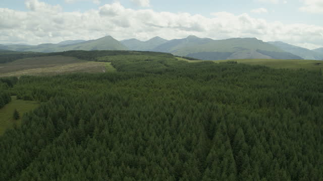 flying over shot of a pine forest on a hillside - evergreen stock videos & royalty-free footage