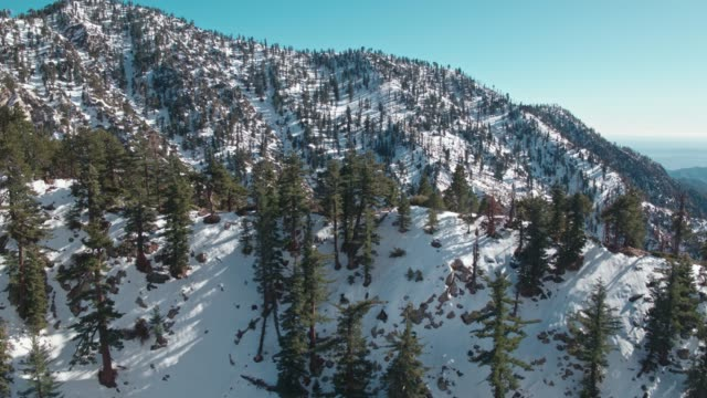 flying over snow covered trees on a mountain - angeles national forest stock videos and b-roll footage