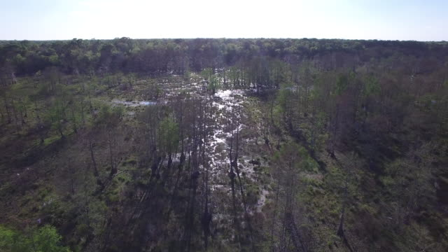 flying over swamp in bayou - drone aerial 4k everglades, swamp bayou with wildlife alligator nesting ibis, anhinga, cormorant, snowy egret, spoonbill, blue heron, eagle, hawk, cypress tree 4k nature/wildlife/weather drone aerial video - bayou lafourche stock-videos und b-roll-filmmaterial
