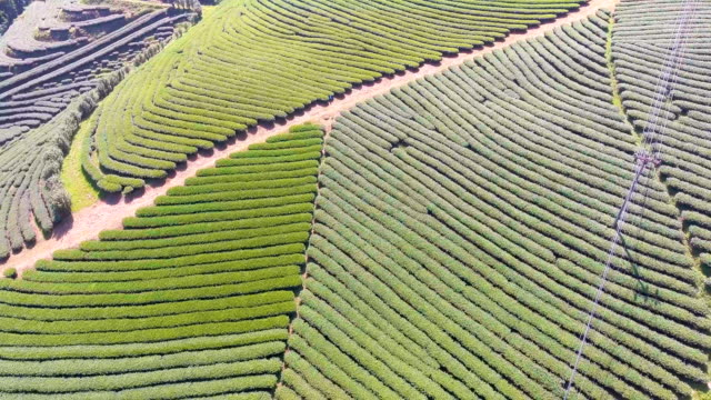 flying over tea plantations on hill, chiangmai province, thailand. aerial video - caffeine molecule stock videos & royalty-free footage