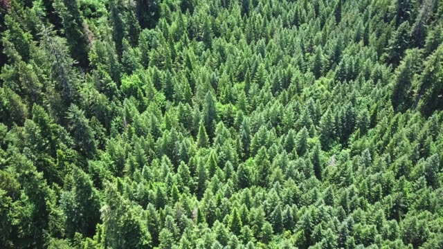 flying over the forest at summer - tree canopy stock videos & royalty-free footage