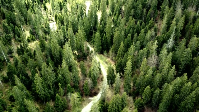 flying over the forest - reforestation stock videos and b-roll footage