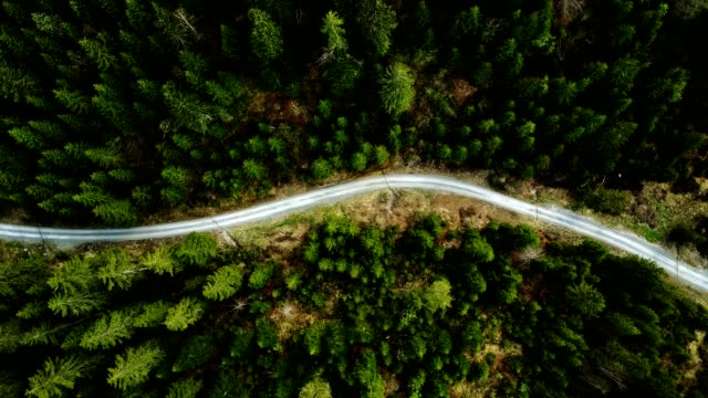 flying over the forest - zona pedonale strada transitabile video stock e b–roll