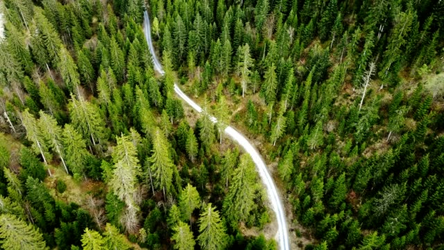flying over the forest - sentiero video stock e b–roll