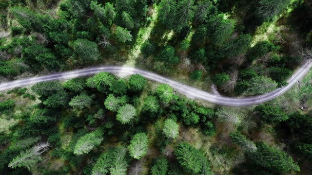 flying over the forest - on top of stock videos & royalty-free footage