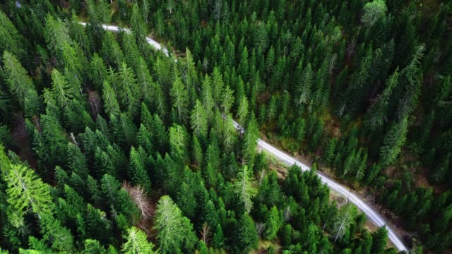 flying over the forest - pine tree stock videos & royalty-free footage