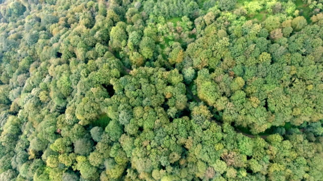 Flying over the green vegetation in a mystical forrest in Iran.