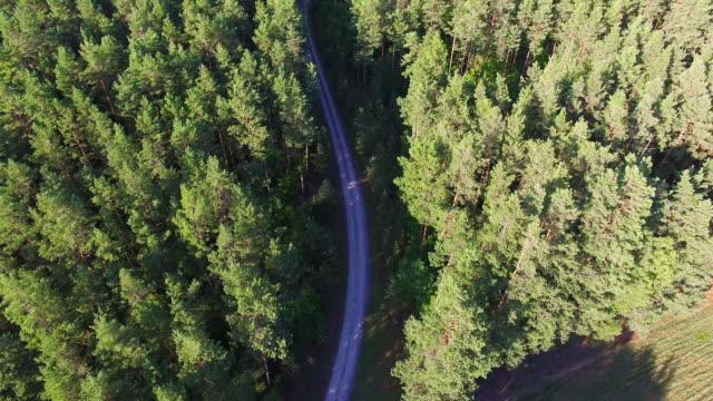 vidéos et rushes de survolant la route dans la forêt de pins d'été 4 k - promulguer