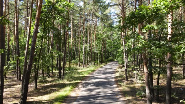 flying over the road through a sunny summer forest - pinaceae stock videos & royalty-free footage