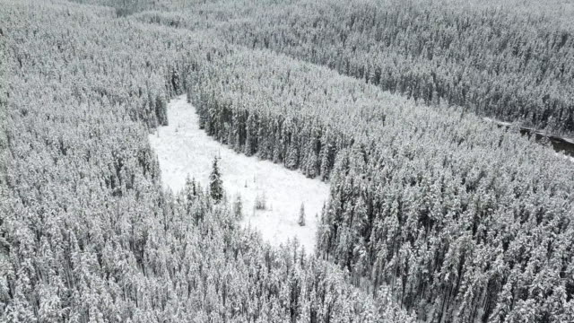 vídeos de stock e filmes b-roll de flying over the snowy spruce forest and toward the lonely wooden cabin - pinhal