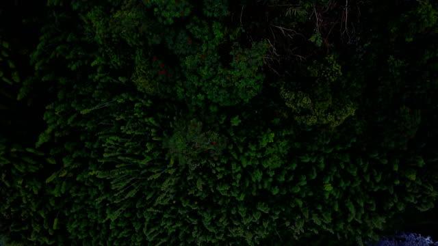 Flying Over épaisse forêt sur l'île de Maui par Drone