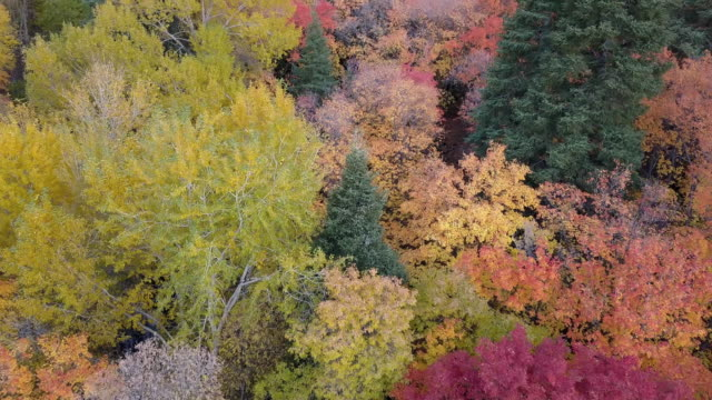 flying over tree tops view colorful fall foliage - autumn leaf color stock videos and b-roll footage