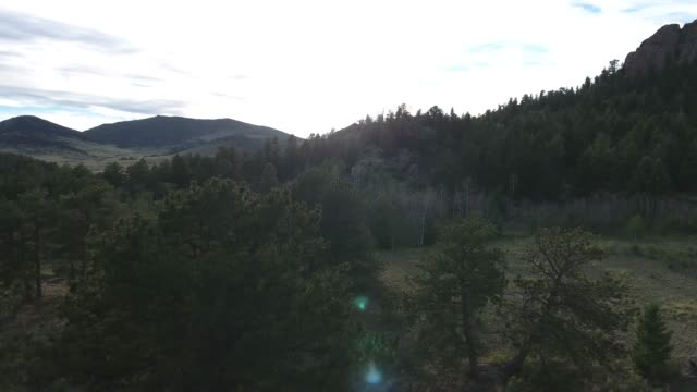 flying over tree tops with sun reflection .mov - appaloosa stock videos and b-roll footage