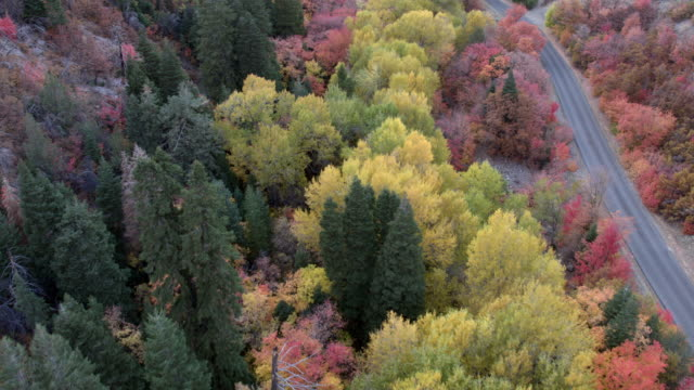 Flying over treetops viewing color Fall foliage